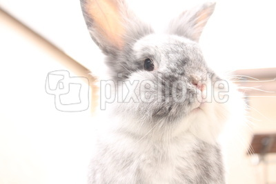 Kaninchen auf Balkon