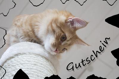 Gutschein mit Katze