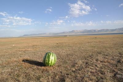Eine Melone in der Steppe