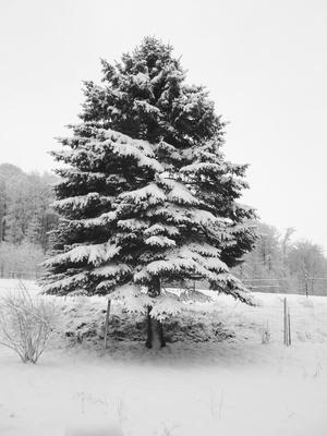 Schneeröckchen