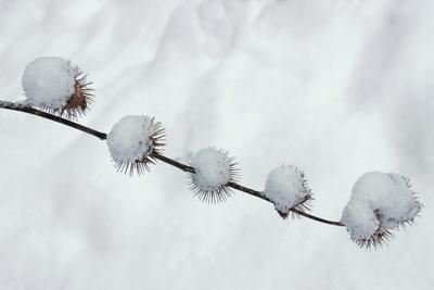 Kletten im Winter