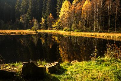 Ellbachsee Herbststimmung mit Stein 2