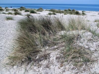 In den Dünen an der Ostsee
