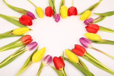 Tulpen Herz