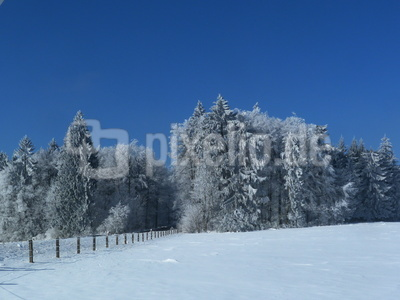 Waldrand im Winter