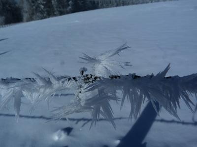 Eiskristalle am Stacheldraht