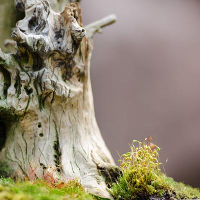 Moos an einem Baumstamm