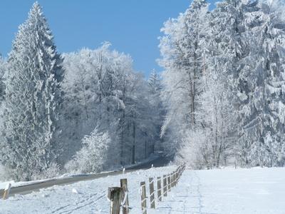 Fahrt durch den Winterwald