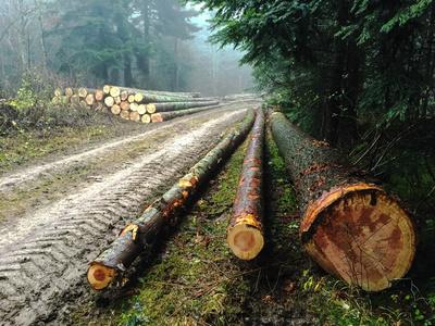 Holzernte im Herbst 2