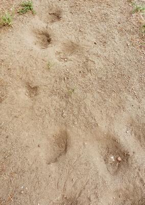 Spatzen - Sandbadeplatz