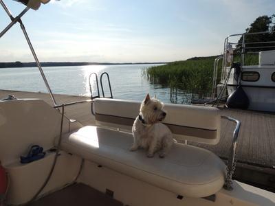 Hund auf Sportboot