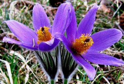 Frühlingspaar