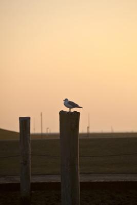 Sonnenuntergang am Wattenmeer 4