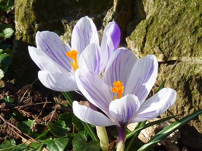 Der Frühling kommt mit großen Schritten ...