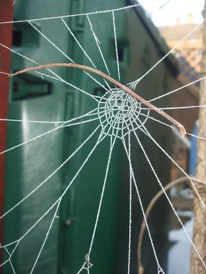 Zufall oder Spinnenkunst