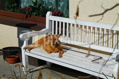 Sonnenbad im Frühling