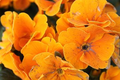 Straßenblumen1