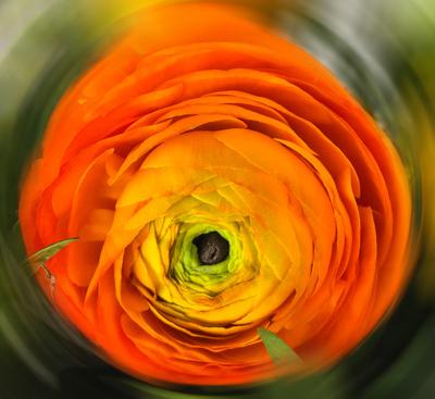 Blüten-Turbo