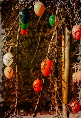 Eierbaum mit Vignette