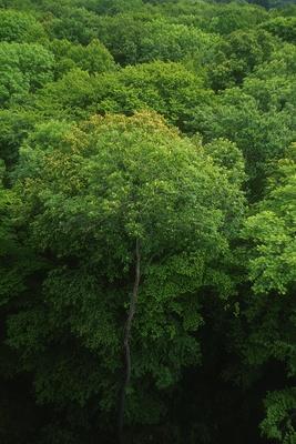 Bäume im Hainich in Thüringen