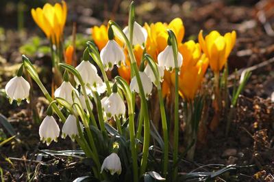 Frühling im Beet