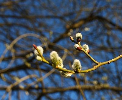 Frühling im Werdenfelser Land 01