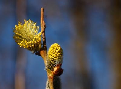 Frühling im Werdenfelser Land 02