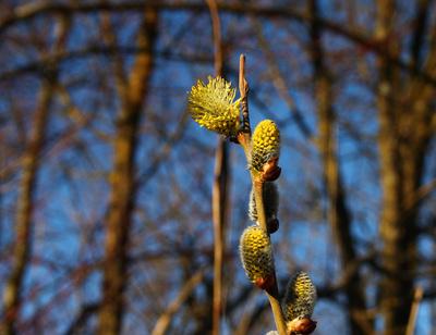 Frühling im Werdenfelser Land 03
