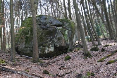 Koloss im Wald