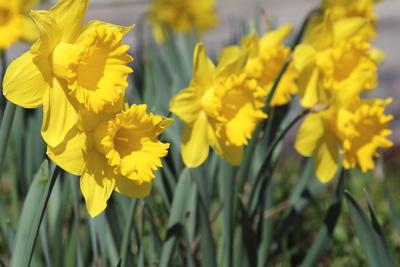 Blüten 386