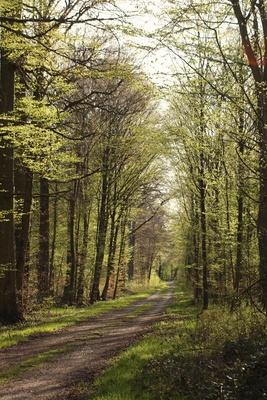 im frühlingswald....