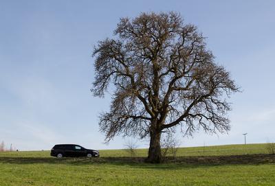 Ford Mondeo neben Baum