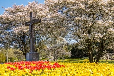 Farbenmeer am Friedhof
