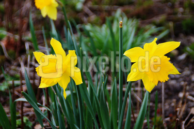 Der Frühling leuchtet