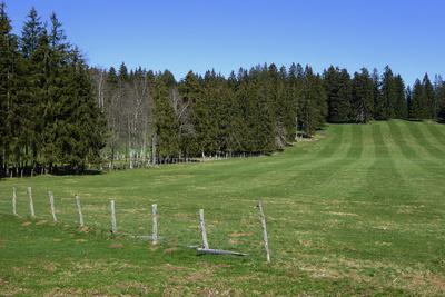 Tannenwälder zwischen weiten Weideflächen