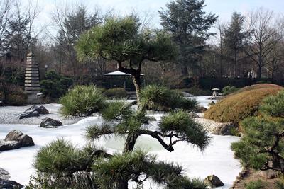 Winter im japanischen Garten.