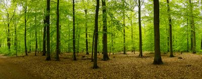 Mai-Wald