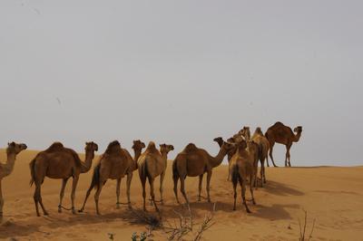 Wüstenbewohner 1
