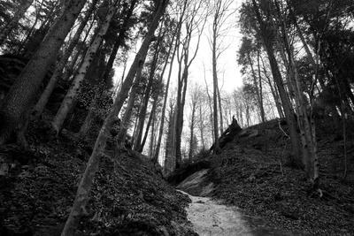 Frühlingswald am Schwarzwasser
