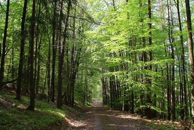 Tief im Walde 01