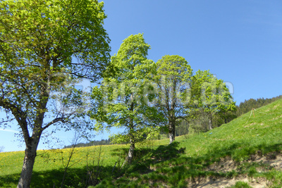 Frisches Grün auf der Alp Eggli