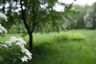 Apfelblüte am Eskesberg