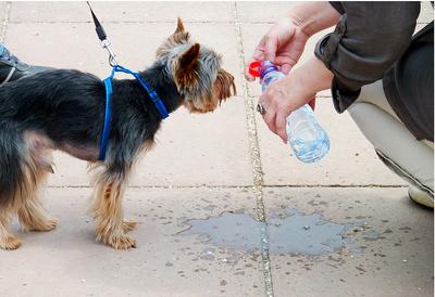Durst - auch Hunde haben Durst