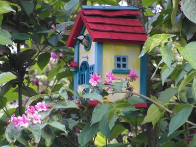 Blaumeisen-Einzug ins neue Heim