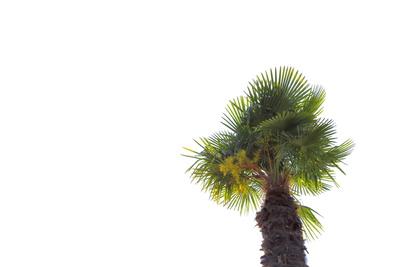 Palmen 3