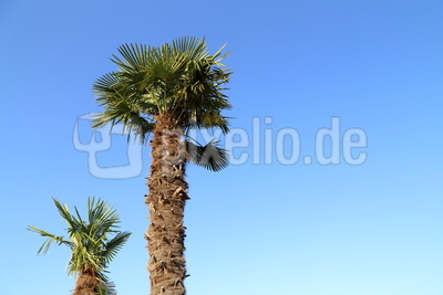 Palmen 4