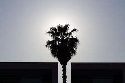 Palmen 1