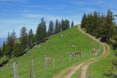 Gratweg zwischen Gnipen und Wildspitz