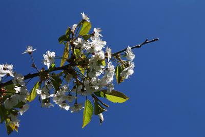 Frühlings.Freuden 02