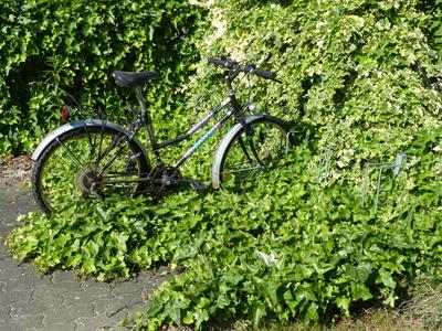 Eingeschränkte Mobilität - Fahrrad im Dornröschenschlaf